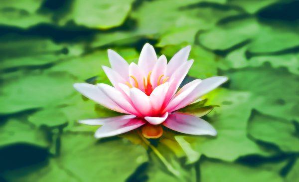 Meditáció kezdőknek angyali segítséggel