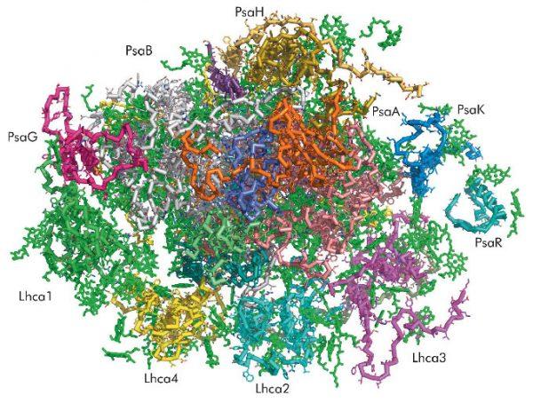 Növényi PS1 (Fotorendszer 1) kristályos szerkezete