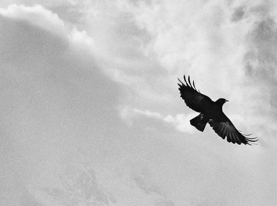 Inkább szárnyaljatok és lezuhanjatok, mintsem a kudarc félelmétől tartva kússzátok végig az életeteket!