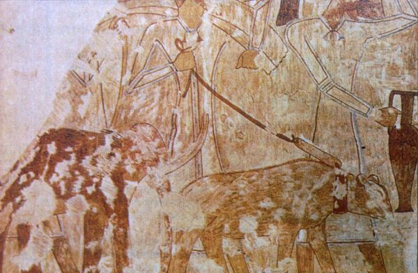 Egyiptom törpeelefánt Rekhmire sírboltjában