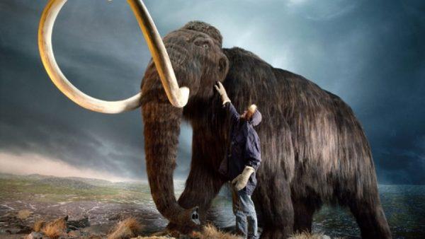 Mamut és ember méretaránya